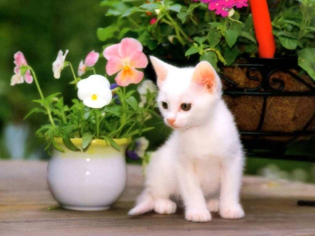 10 top cat wallpapers free download full hd 1920×1080 for pc desktop