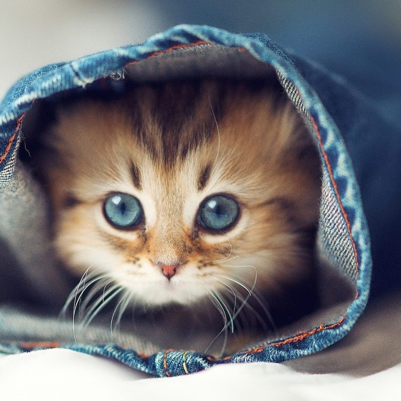 10 Best Cute Cat Wallpaper Hd FULL HD 1920×1080 For PC Background 2018 free download cute cats cat wallpaper meme hd wallpapers photos 800x800
