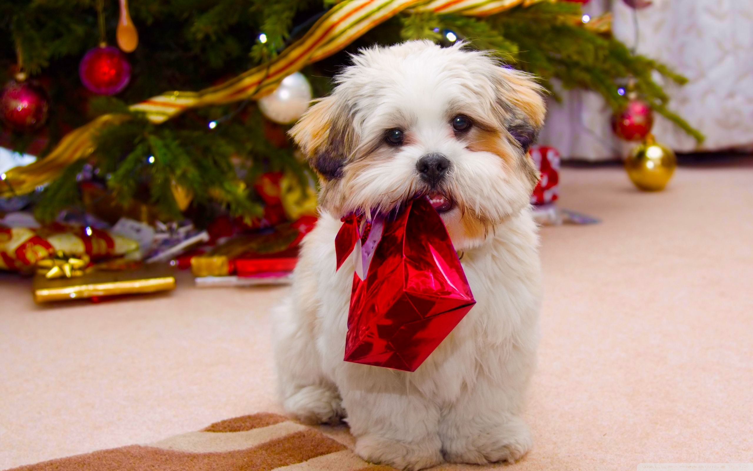 cute dog christmas ❤ 4k hd desktop wallpaper for 4k ultra hd tv