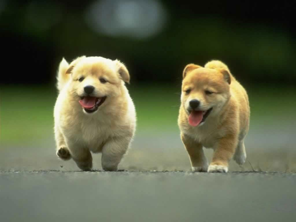 10 Best Dog Wallpaper For Android FULL HD 1920×1080 For PC Desktop 2018 free download cute dog wallpapers wallpaper cave 1024x768