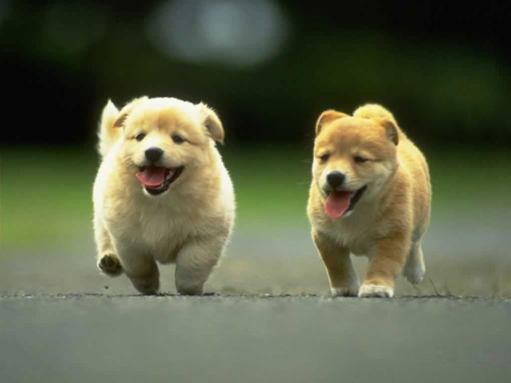 10 Best Dog Wallpaper For Android FULL HD 1920×1080 For PC Desktop