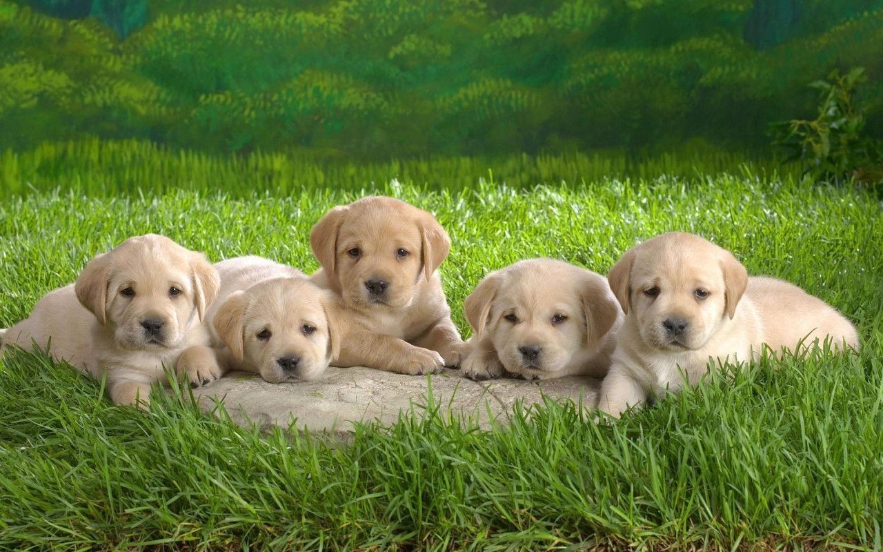 cute dogs and puppies wallpapers - wallpaper cave | images