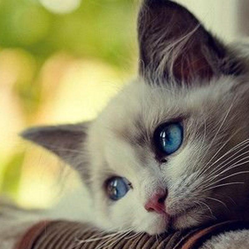 10 Most Popular Cute Cat Desktop Wallpaper FULL HD 1920×1080 For PC Desktop 2020 free download cute funny cat wallpapers image download e380902018e38091 800x800
