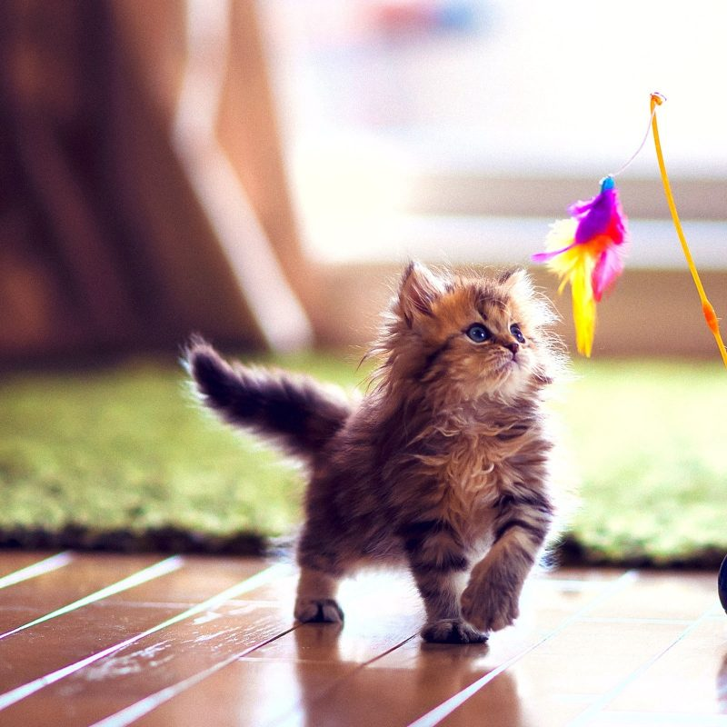 10 Top High Definition Cute Wallpapers FULL HD 1080p For PC Background 2018 free download cute kitten playing e29da4 4k hd desktop wallpaper for 4k ultra hd tv 800x800