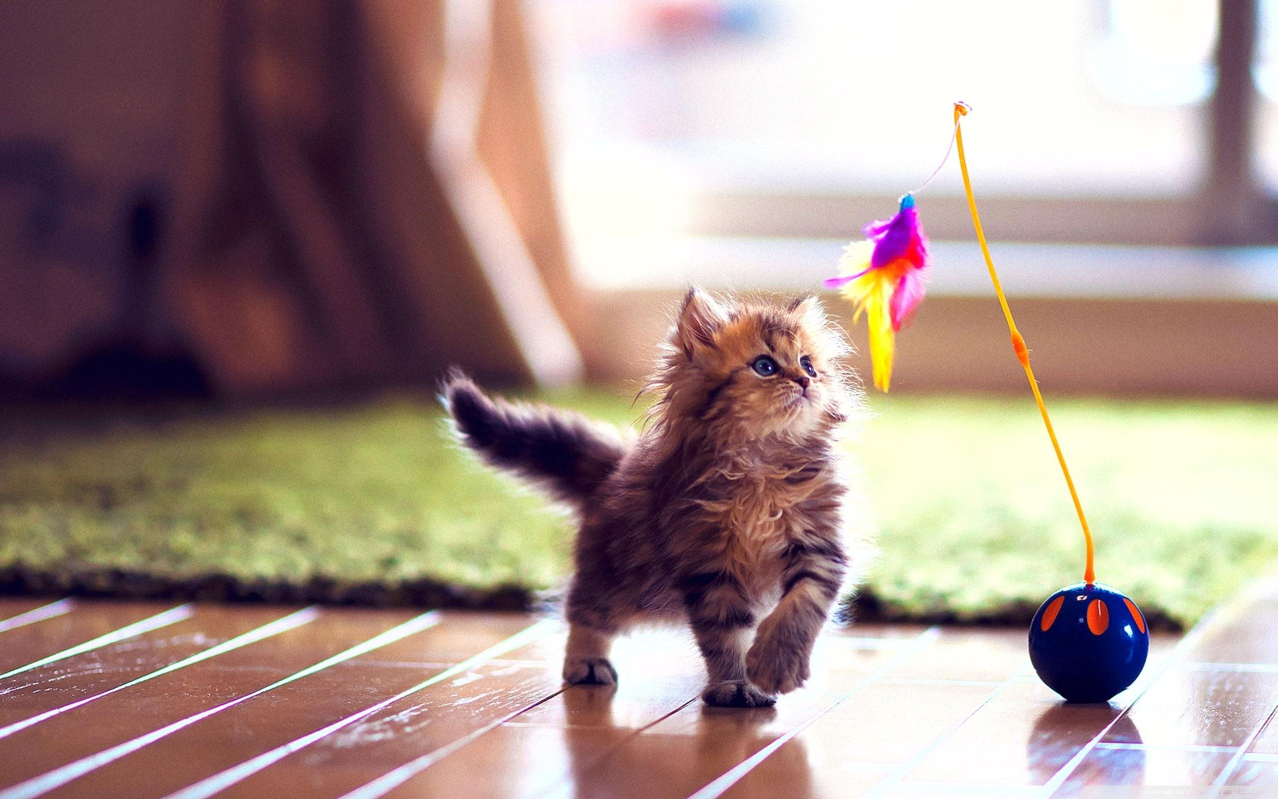cute kitten playing ❤ 4k hd desktop wallpaper for 4k ultra hd tv