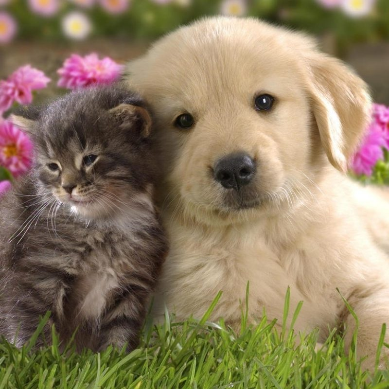 10 Most Popular Puppies And Kittens Pics FULL HD 1920×1080 For PC Desktop 2018 free download cute pictures of puppies and kittens together pets world 5 800x800