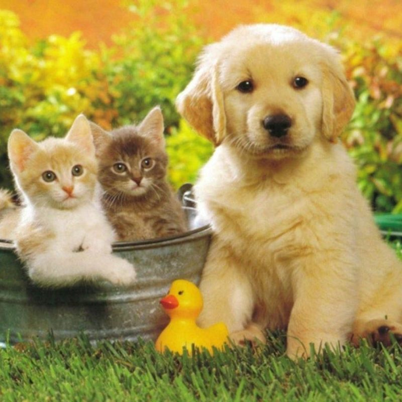 10 Most Popular Puppies And Kittens Pics FULL HD 1920×1080 For PC Desktop 2018 free download cute pictures of puppies and kittens together pets world 6 800x800