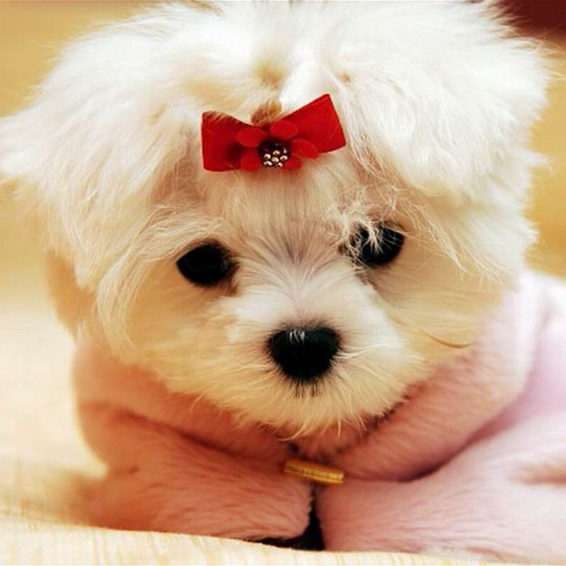 10 Most Popular Cute Puppy Pictures Wallpaper FULL HD 1920×1080 For PC Desktop 2020 free download cute puppies 4 390189 high definition wallpapers wallalay 800x800