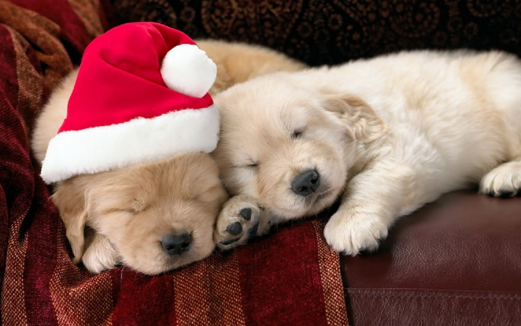 10 New Cute Puppy Christmas Pictures FULL HD 1920×1080 For PC Background