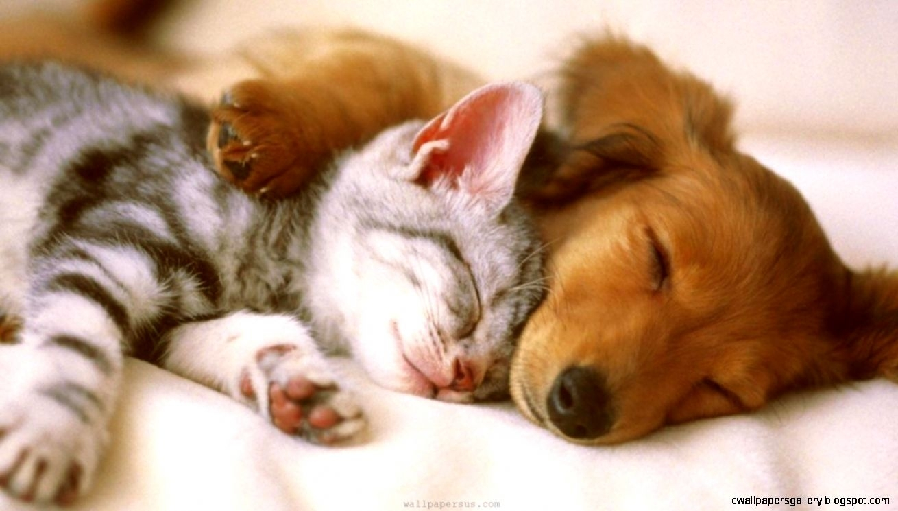 cute puppy and kitten wallpaper | wallpapers gallery