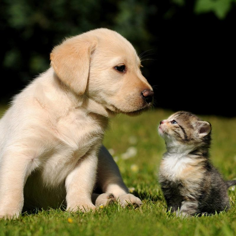 10 Top Puppies And Kittens Wallpaper FULL HD 1080p For PC Desktop 2018 free download cute puppy and kitten wallpapers 58 images 3 800x800