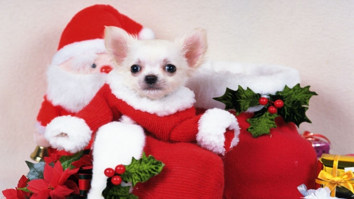 cute puppy christmas images dowload