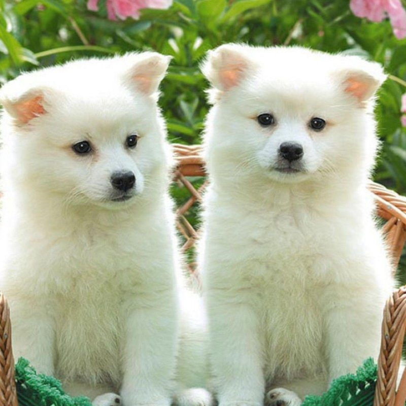 10 Most Popular Cute Puppy Wallpaper Hd FULL HD 1920×1080 For PC Background 2018 free download cute puppy desktop wallpapers wallpaper cave 1 800x800