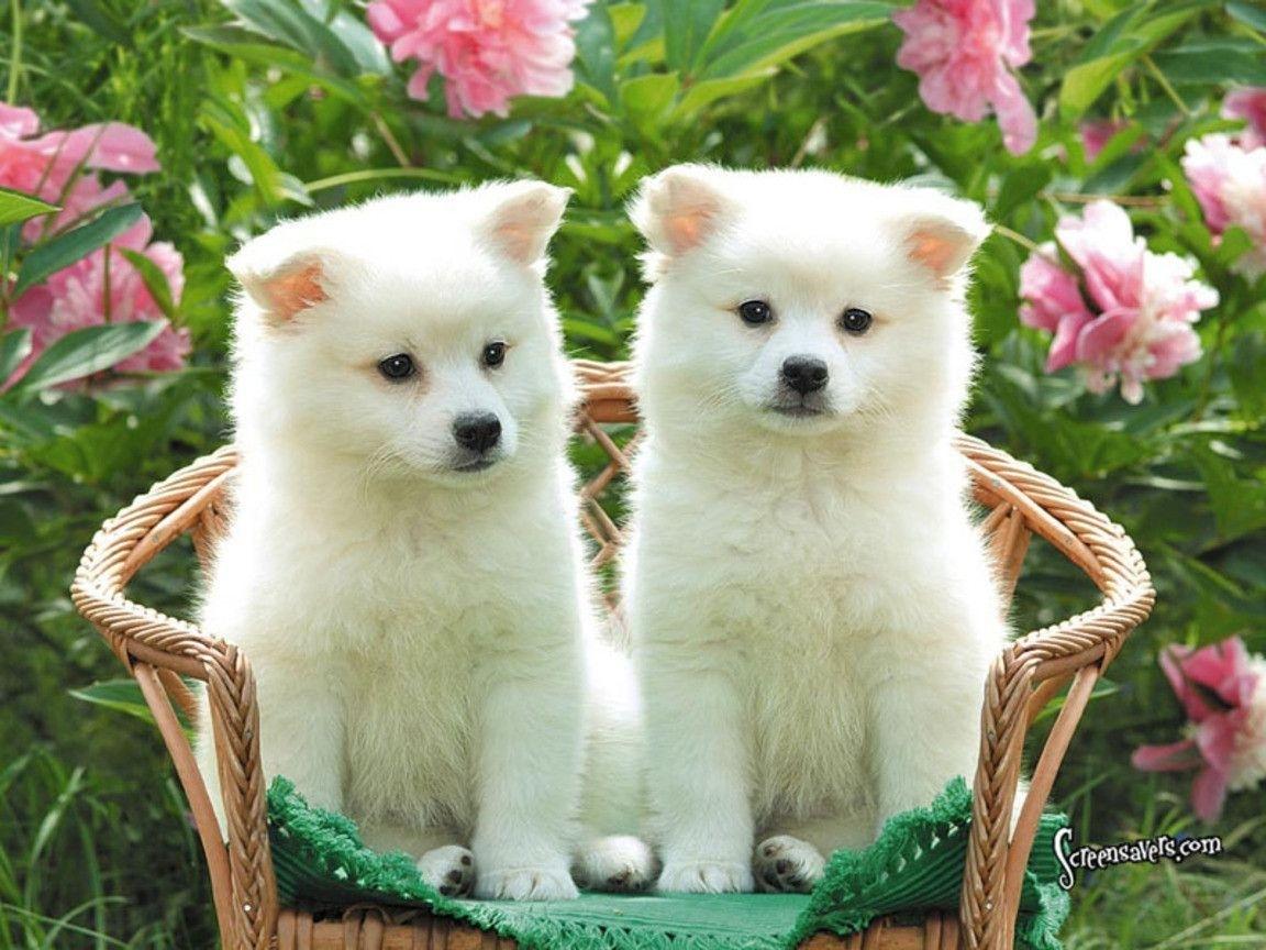 cute puppy wallpaper dogs hd wallpapers pinterest dog   wallpapers