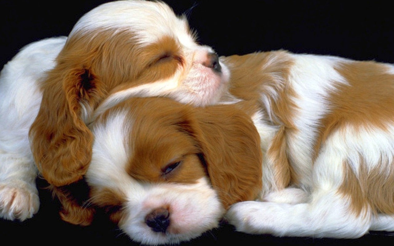 cute puppy wallpapers, full hd 1080p, best hd cute puppy wallpapers