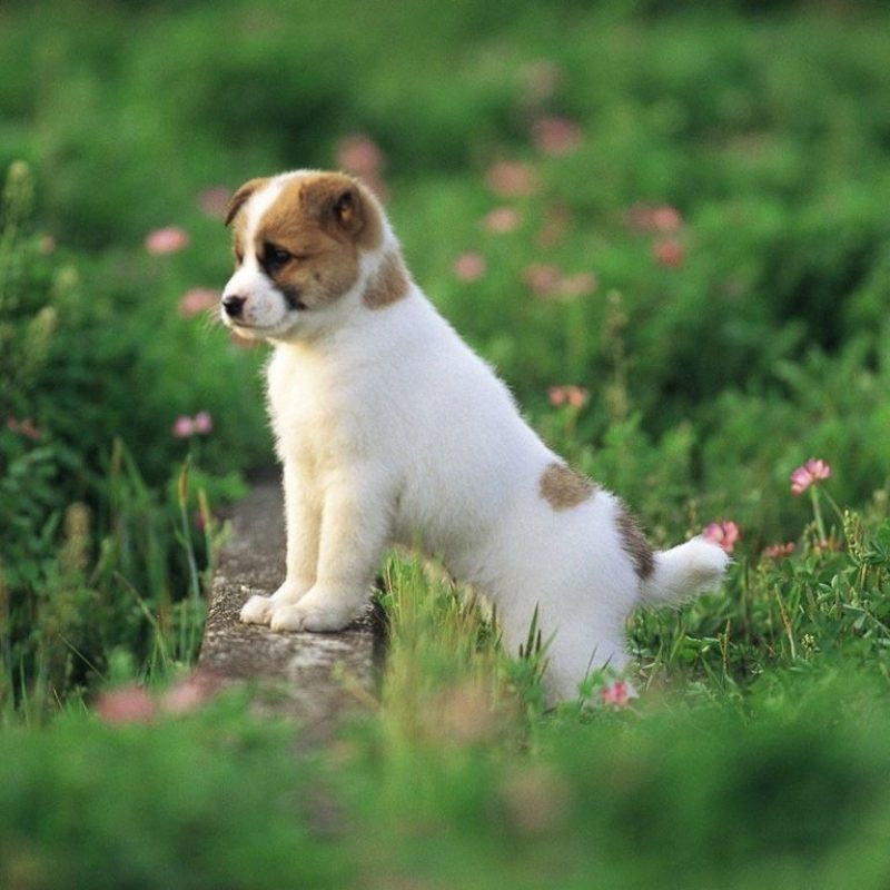 10 Most Popular Cute Puppy Wallpaper Hd FULL HD 1920×1080 For PC Background 2018 free download cute puppy wallpapers hd android apps on google play wallpapers 800x800