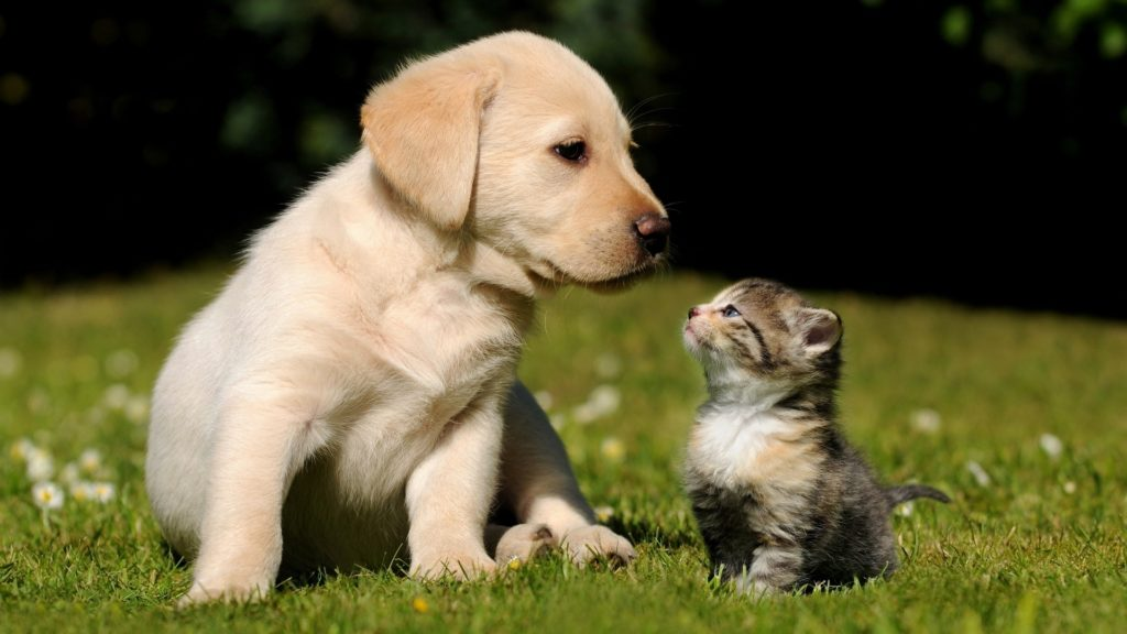 10 Most Popular Cute Puppy Hd Wallpapers FULL HD 1080p For PC Desktop 2018 free download cute puppys images wallpaper 1024x576