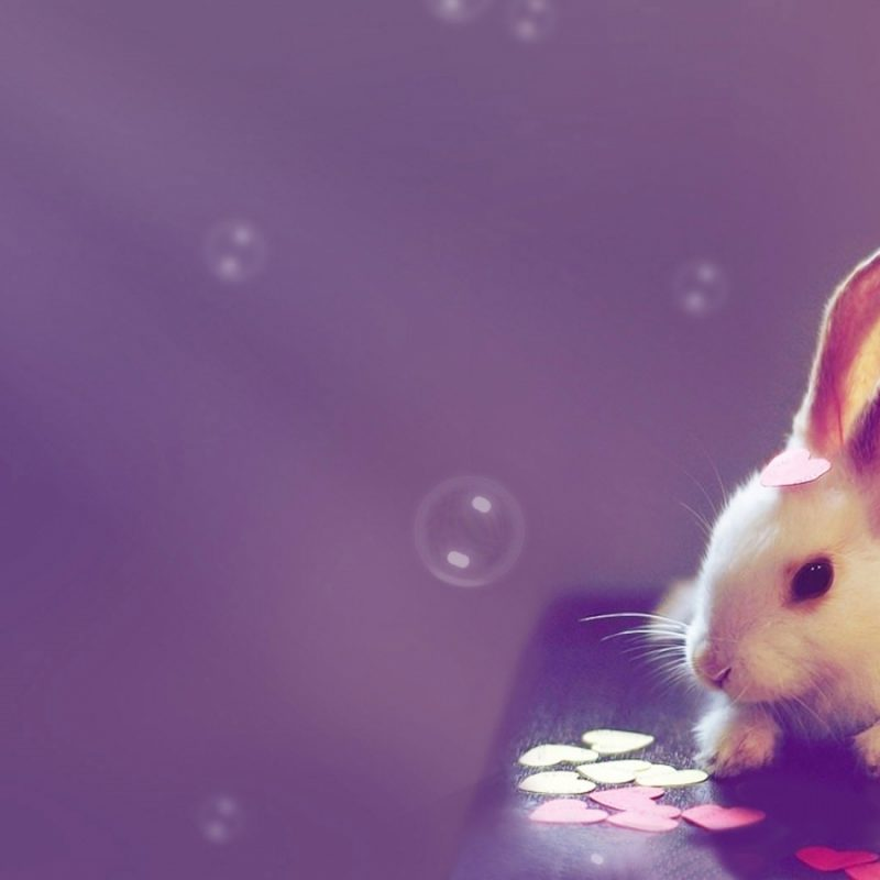 10 Most Popular Free Cute Desktop Wallpaper FULL HD 1920×1080 For PC Background 2020 free download cute wallpapers 15723 1440x900 px hdwallsource 800x800