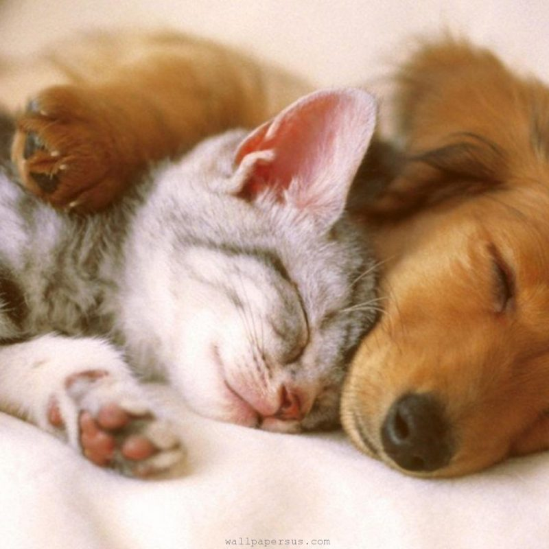 10 Most Popular Pictures Of Puppies And Kitties FULL HD 1080p For PC Background 2018 free download cutest kittens puppies falling asleep compilation youtube 1 800x800