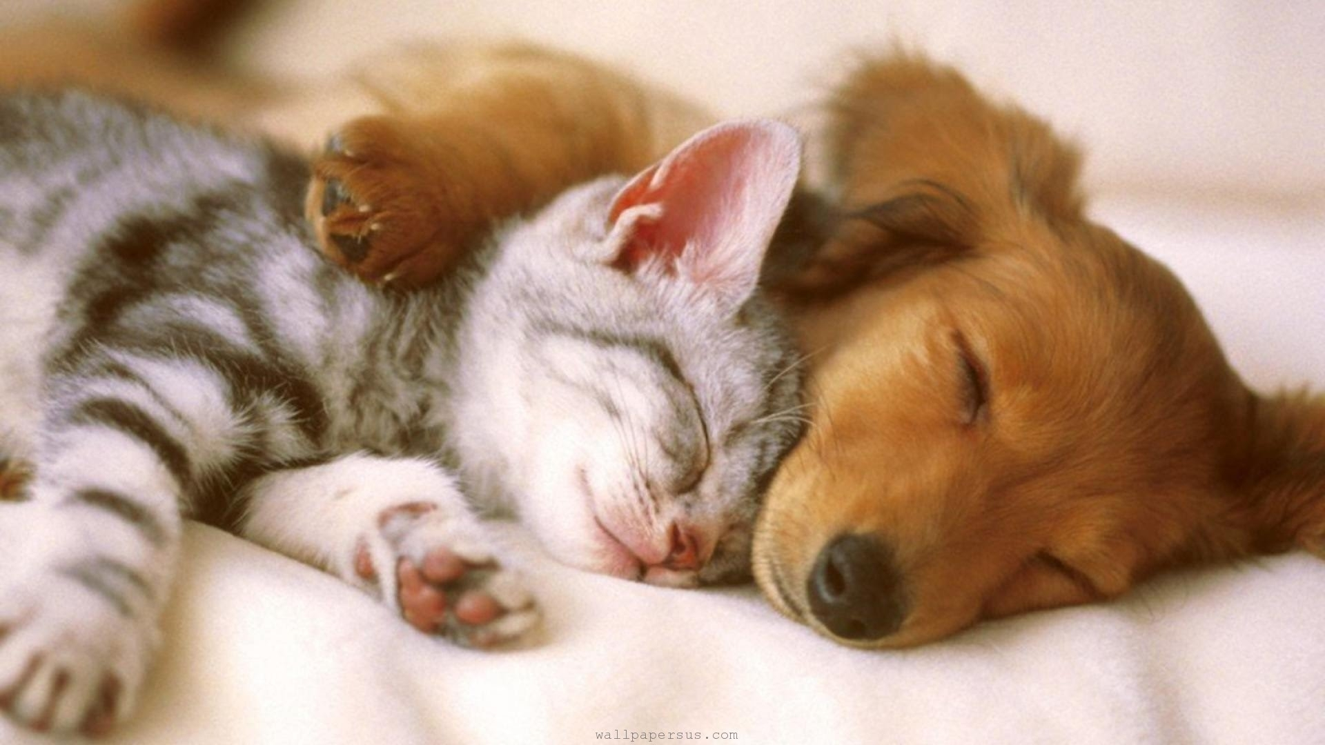 cutest kittens & puppies falling asleep compilation - youtube