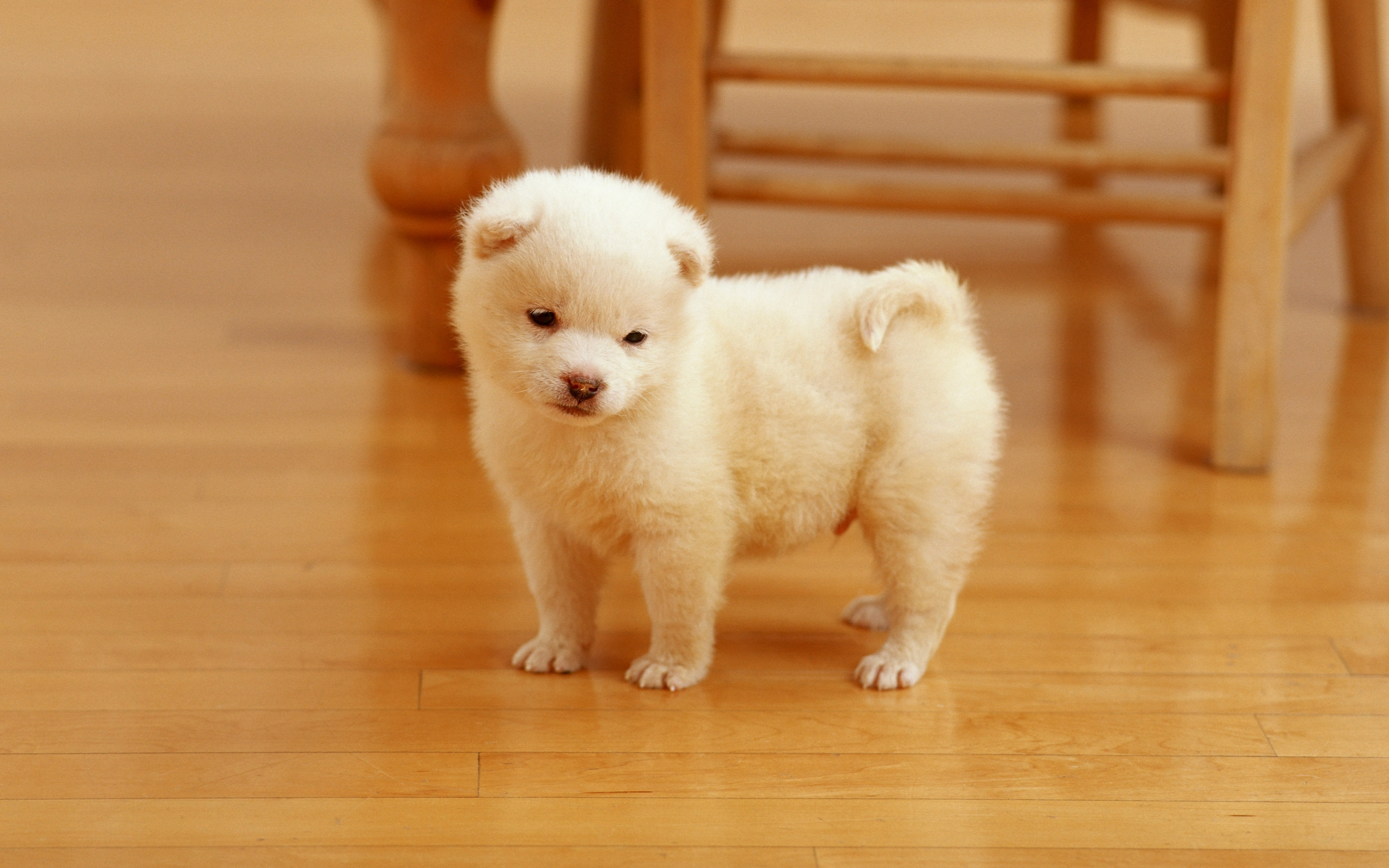 cutest puppy wallpapers | hd wallpapers | id #10378