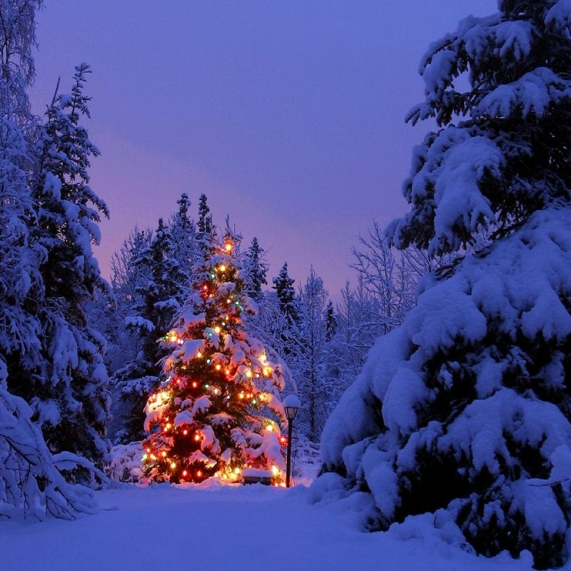 10 New Christmas Scenes For Desktop FULL HD 1080p For PC Background 2018 free download d8b9daa9d8b3 d987d8a7db8cdb8c d8acd8afdb8cd8af d8a8d8a7 daa9db8cd981db8cd8aa d8a8d8a7d984d8a7 hd d985d986d8a7d8b3d8a8 d8a8d8b1d8a7db8c 800x800