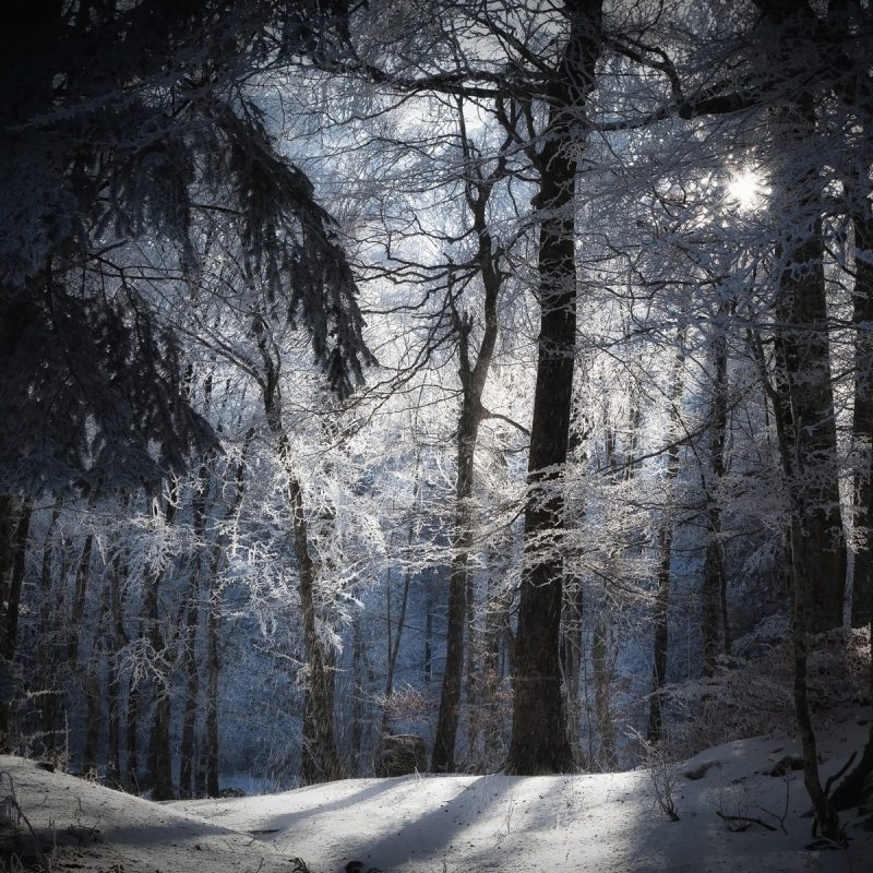 10 Latest Winter Forest Hd Wallpaper FULL HD 1080p For PC Desktop 2018 free download daily wallpaper winter forest i like to waste my time 800x800