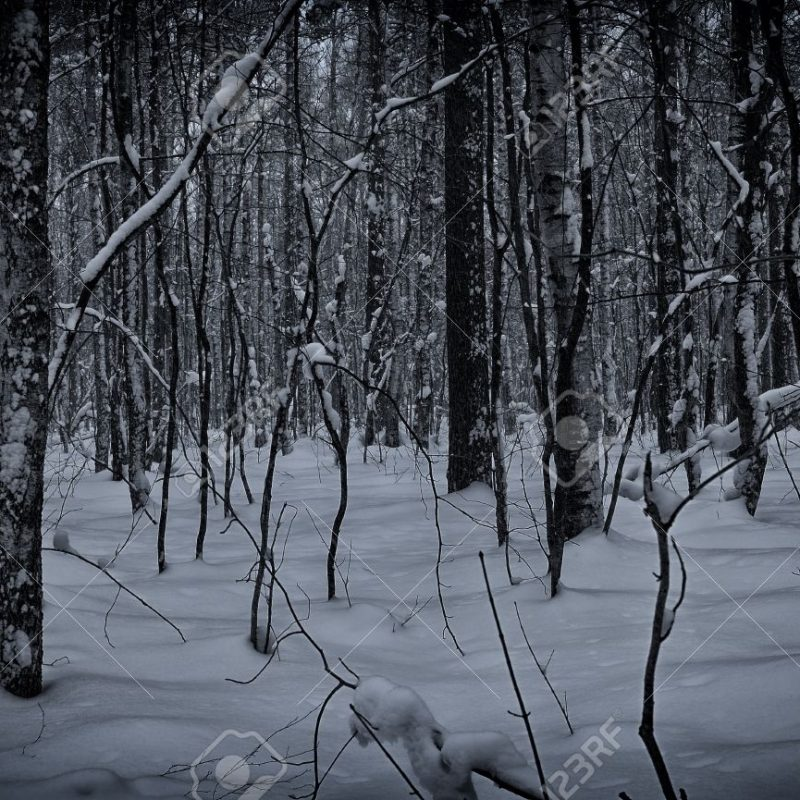 10 Top Dark Snowy Forest Background FULL HD 1920×1080 For PC Desktop 2020 free download dark and snowy winter forest background stock photo picture and 800x800