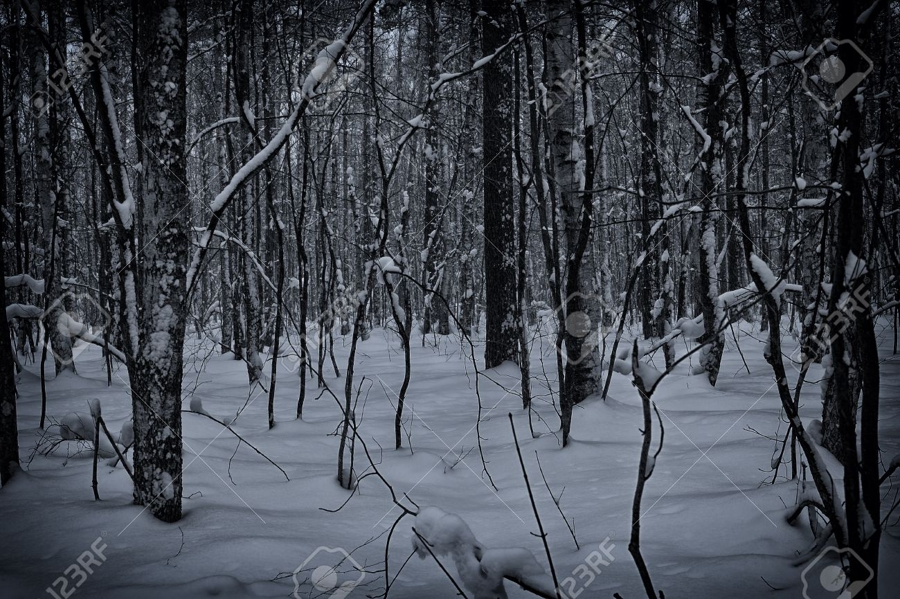 dark and snowy winter forest background stock photo, picture and