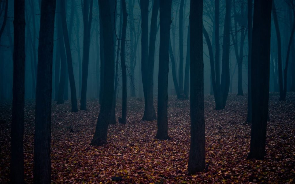 10 Top Dark Forest Background Tumblr FULL HD 1080p For PC Background 2018 free download dark forest awesome dark forest pictures and wallpapers 30 on 1024x640