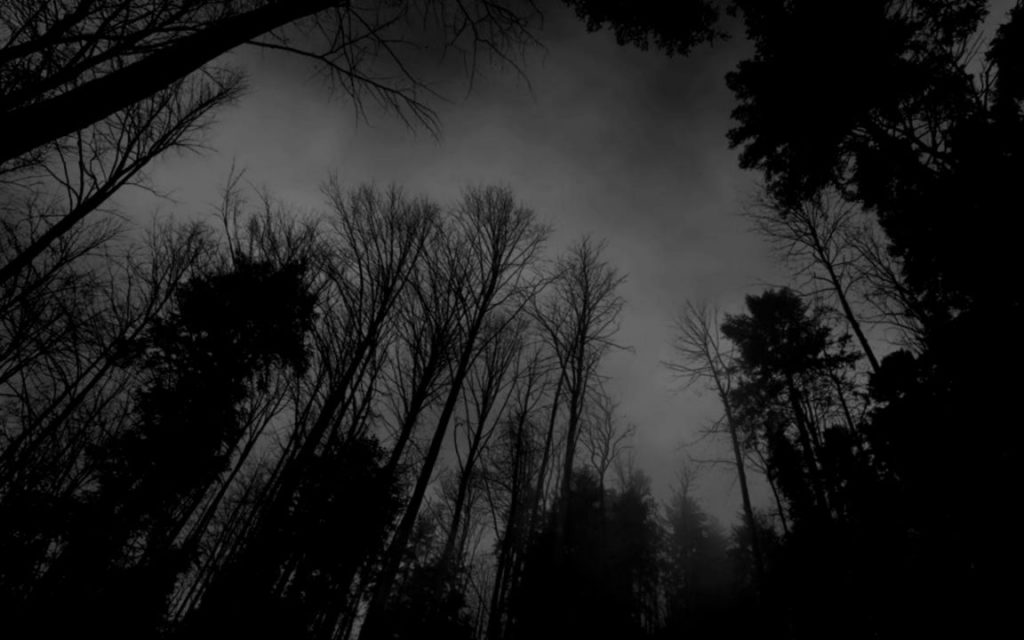 10 Top Dark Forest Background Tumblr FULL HD 1080p For PC Background 2020 free download dark forest background tumblr wallpapers gallery 1024x640