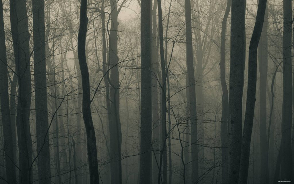 10 Top Dark Forest Background Tumblr FULL HD 1080p For PC Background 2018 free download dark forest backgrounds wallpaper cave 1024x640