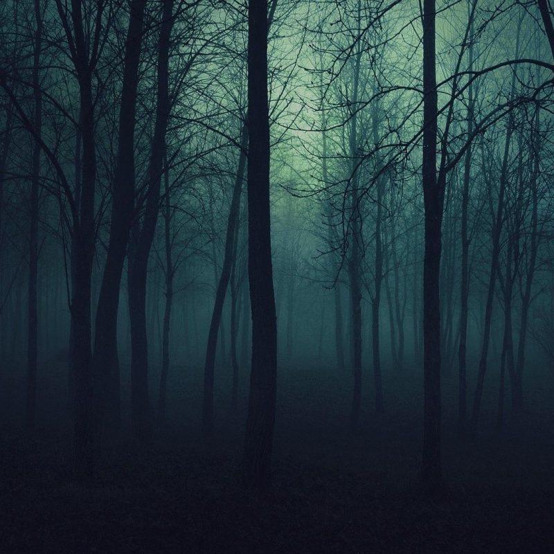 10 New Dark Forest Desktop Wallpaper FULL HD 1920×1080 For PC Background 2018 free download dark forest backgrounds wallpapertags dark forest hd tablet 800x800