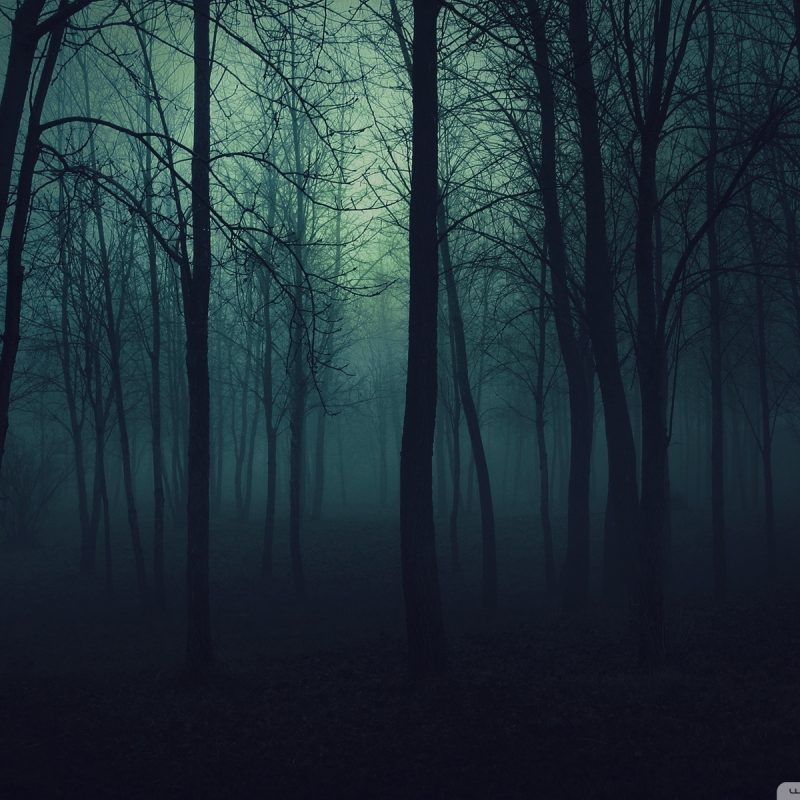10 Most Popular Dark Forest Wallpaper Hd FULL HD 1080p For PC Background 2021 free download dark forest e29da4 4k hd desktop wallpaper for 4k ultra hd tv e280a2 tablet 800x800