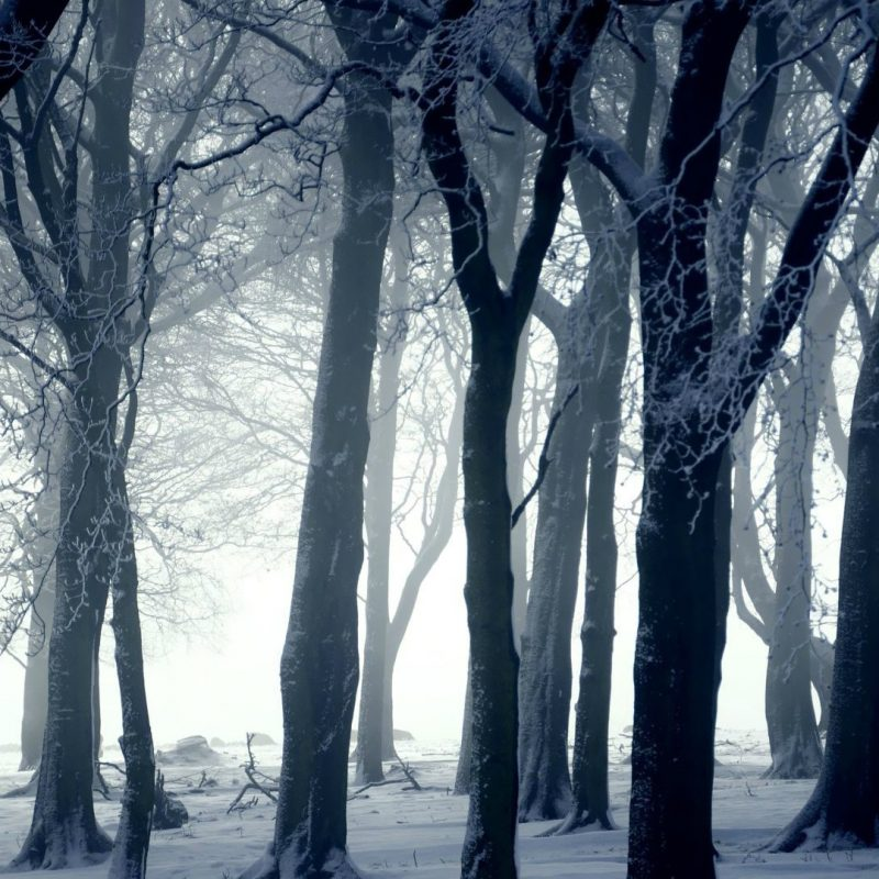 10 Top Dark Snowy Forest Background FULL HD 1920×1080 For PC Desktop 2020 free download dark forest in winter wallpaper photography wallpapers 16423 1 800x800