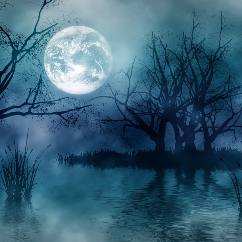 10 Latest Forest Full Moon Wallpaper FULL HD 1920×1080 For PC Desktop 2018 free download dark forest moon wallpaper high quality resolution outdoors 800x800