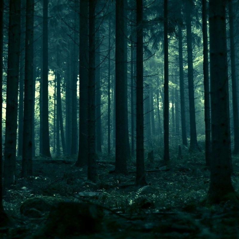 10 Latest Dark Forest Wallpapers Hd FULL HD 1920×1080 For PC Background 2020 free download dark forest wallpaper bdfjade 800x800