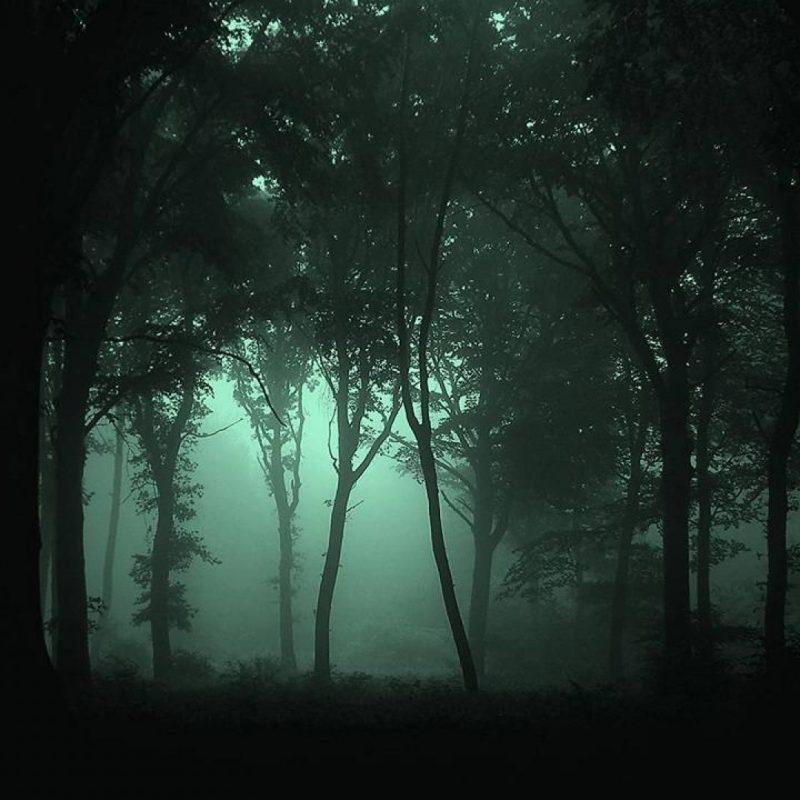 10 New Dark Forest Desktop Wallpaper FULL HD 1920×1080 For PC Background 2018 free download dark forest wallpaper high quality resolution vrj earth pinterest 1 800x800