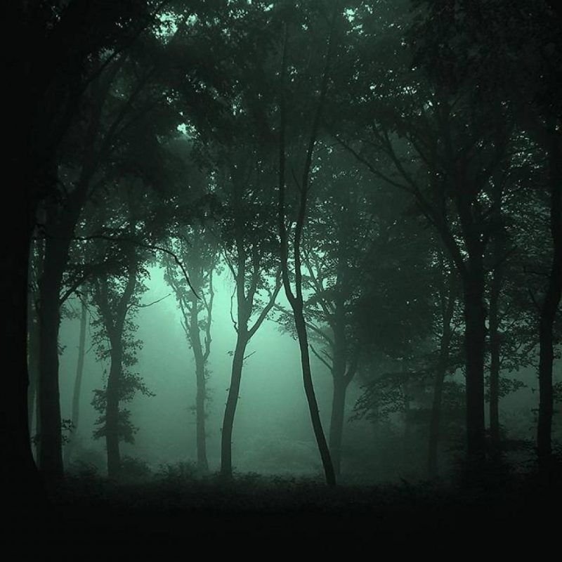 10 Most Popular Dark Forest Wallpaper Hd FULL HD 1080p For PC Background 2021 free download dark forest wallpaper high quality resolution vrj earth pinterest 800x800