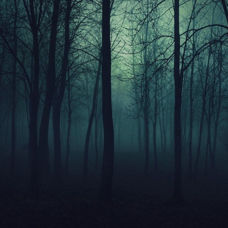 10 Most Popular Dark Forest Wallpaper Hd FULL HD 1080p For PC Background 2021 free download dark forest wallpapers gorgeous hdq live dark forest photos 800x800