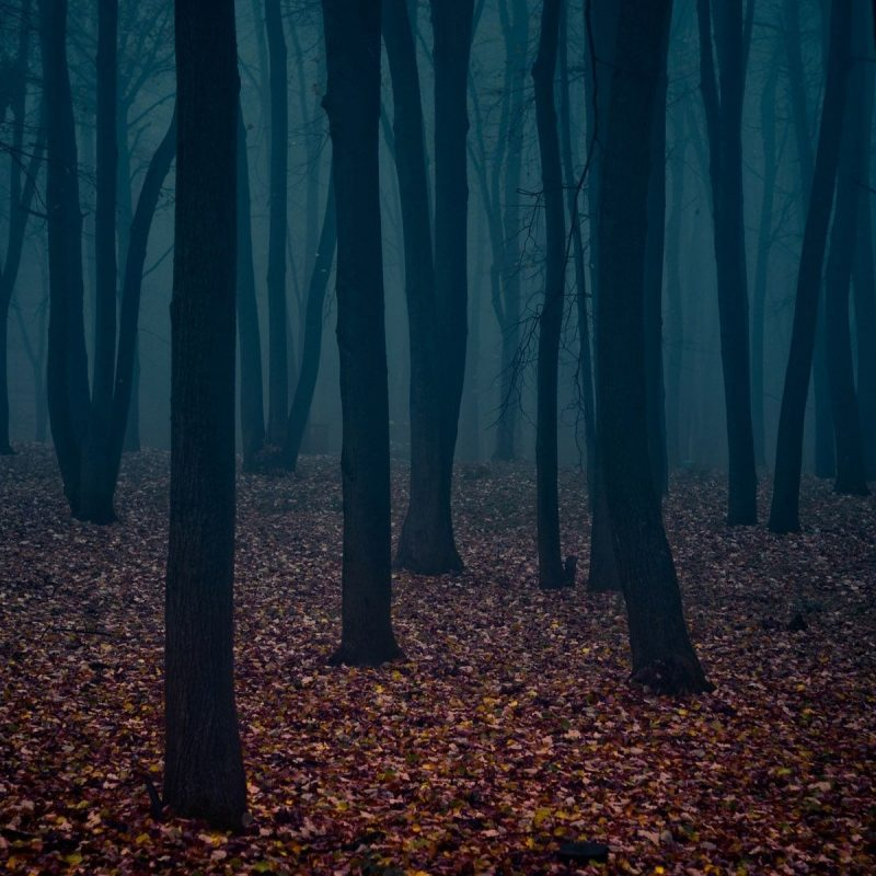 10 Latest Dark Forest Wallpapers Hd FULL HD 1920×1080 For PC Background 2018 free download dark forest wallpapers hd wallpapers pulse 1 800x800
