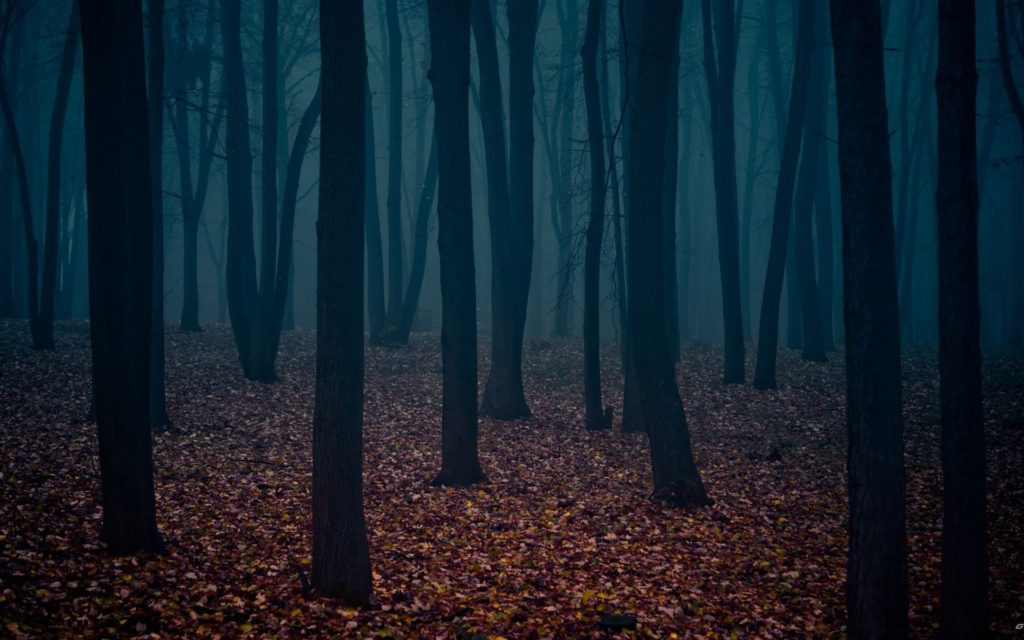 10 Top Dark Forest Background Tumblr FULL HD 1080p For PC Background 2018 free download dark forest wallpapers hd wallpapers pulse 1024x640