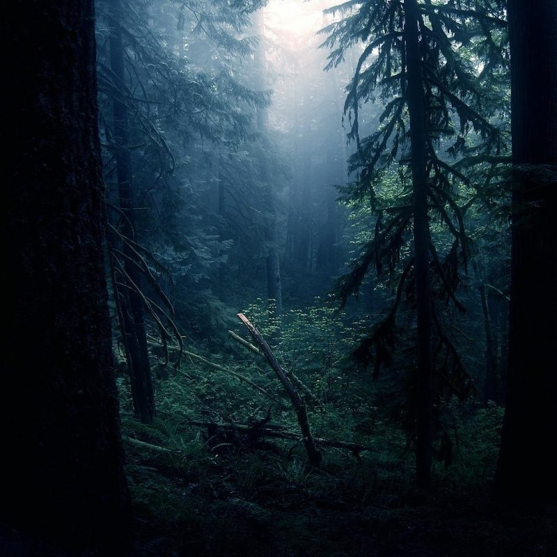 10 Top Hd Wallpapers Dark Forest FULL HD 1080p For PC Background 2020 free download dark forest wallpapers photo free download subwallpaper 800x800
