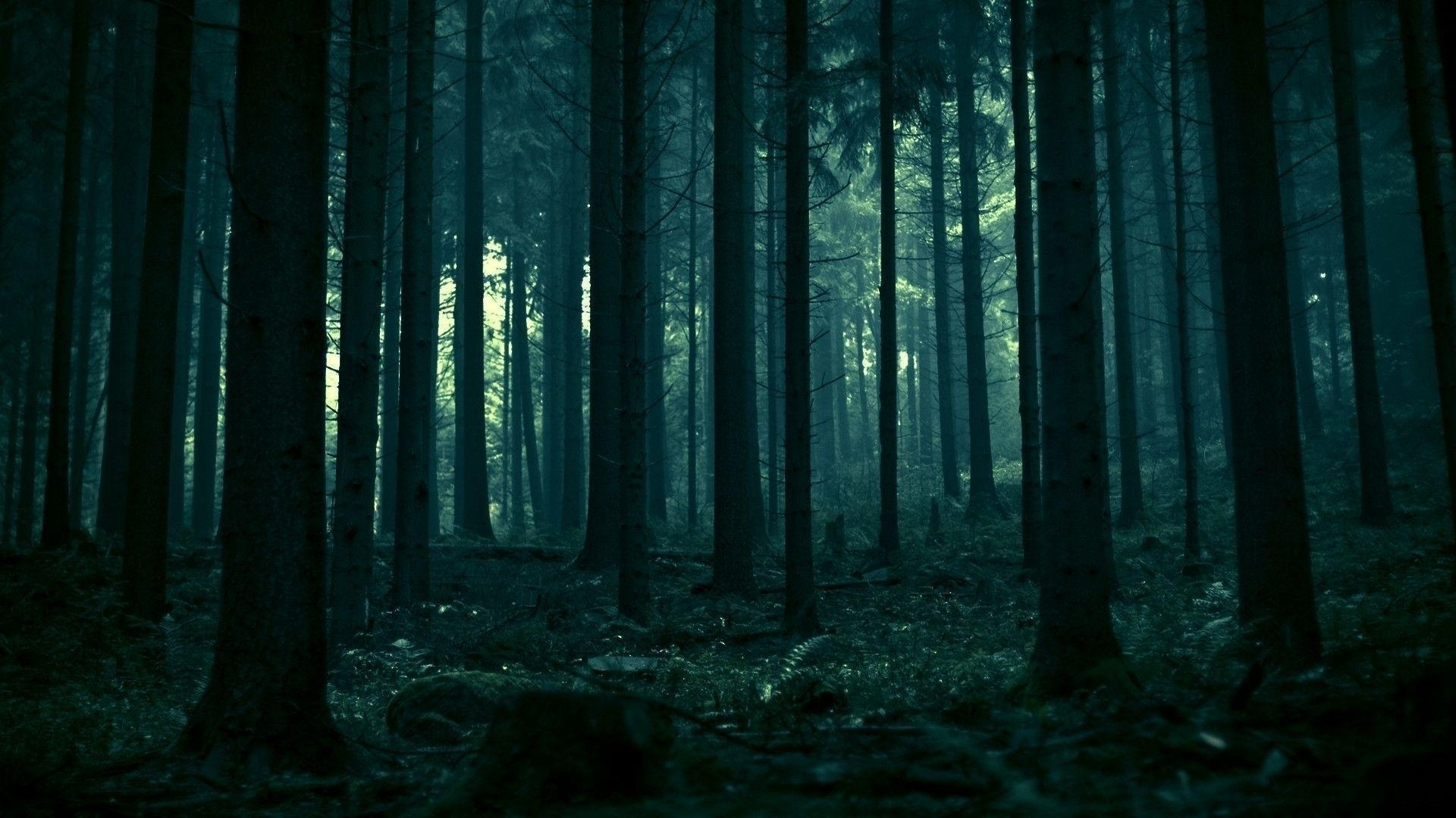 dark forest wallpapers - wallpaper cave