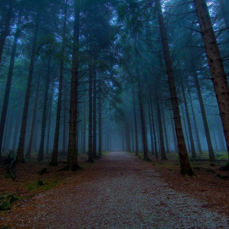 10 Most Popular Forest Wallpaper Hd 1080P FULL HD 1920×1080 For PC Background 2020 free download dark forest wallpapers wallpaper cave 3 800x800