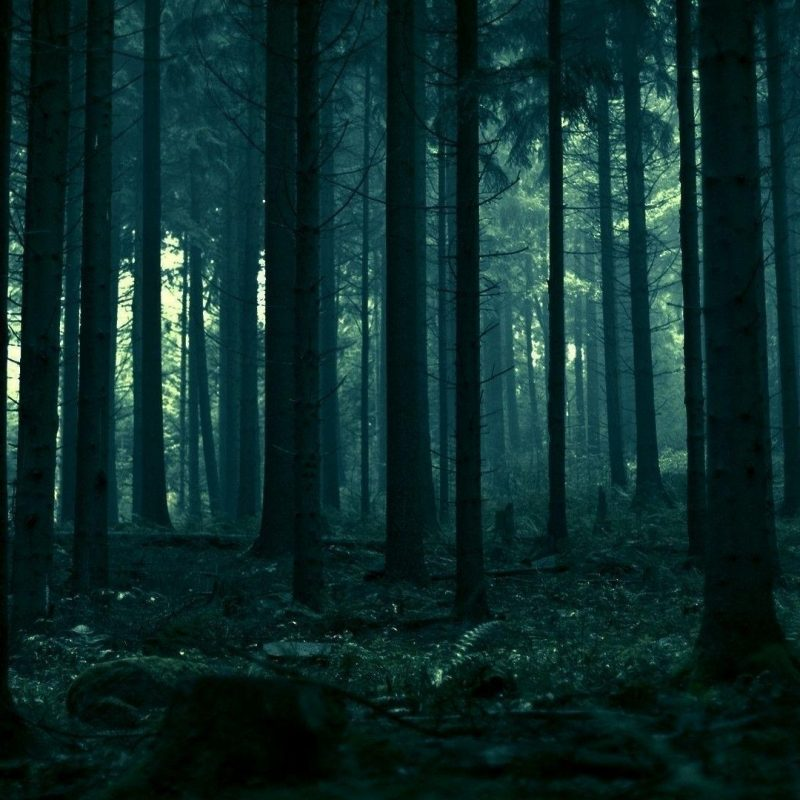 10 New Dark Forest Desktop Wallpaper FULL HD 1920×1080 For PC Background 2018 free download dark forest wallpapers wallpaper cave 4 800x800