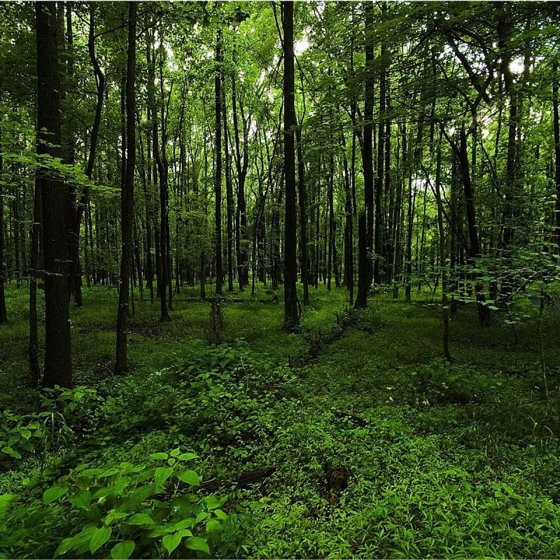 10 Most Popular Dark Green Forest Wallpaper FULL HD 1080p For PC Background 2018 free download dark green forest google search moth wings pinterest moth 800x800