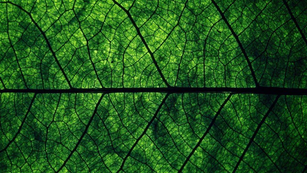 10 Best Dark Green Wallpaper Hd FULL HD 1080p For PC Desktop 2018 free download dark green wallpapers wallpaper cave 1024x576