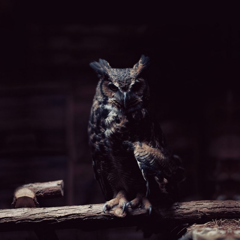 10 Top Owl Desktop Wallpaper Hd FULL HD 1920×1080 For PC Desktop 2018 free download dark owl wallpapers pixelstalk 800x800
