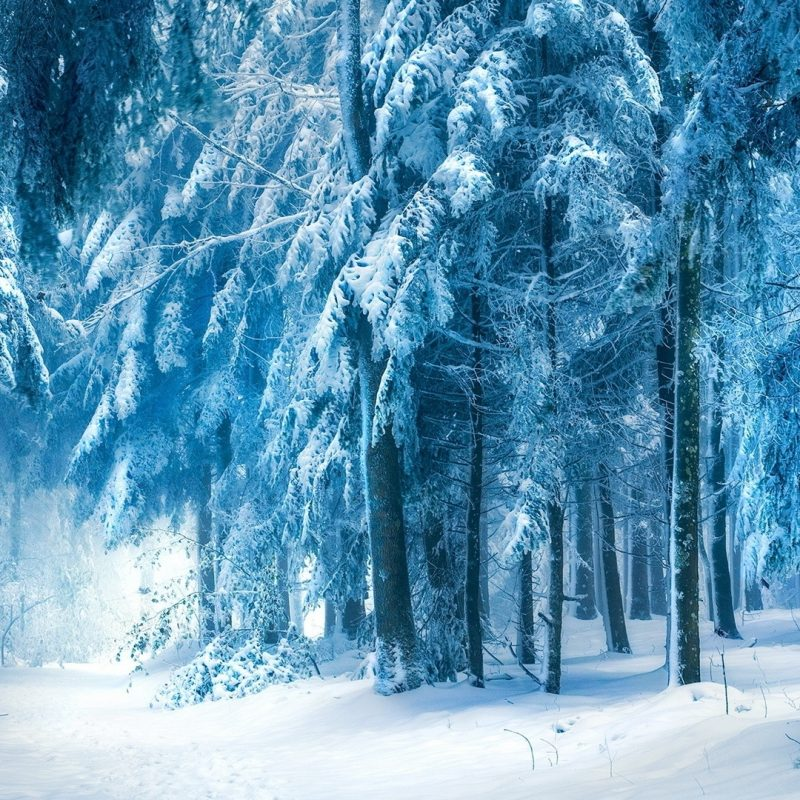 10 Top Dark Snowy Forest Background FULL HD 1920×1080 For PC Desktop 2020 free download dark snowy forest hd desktop wallpaper instagram photo background 800x800